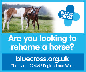 Blue Cross 2020 B (South Yorkshire Horse)